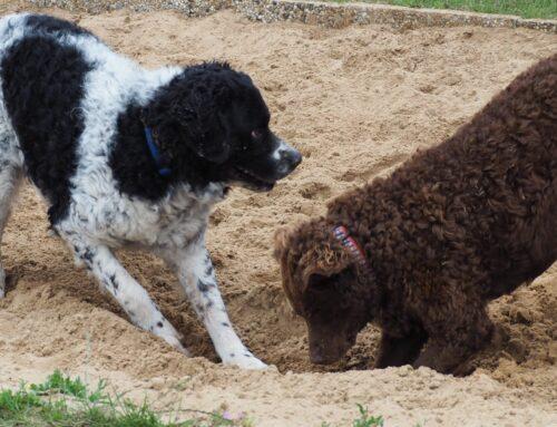 Honden speeltuindag Wierden
