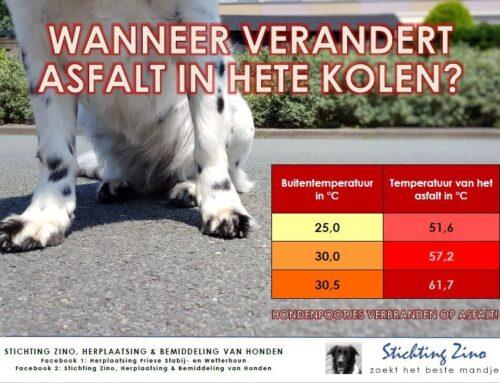 Let op: Laat honden niet op heet asfalt lopen!