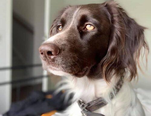 Cooper zoekt een nieuw mandje!