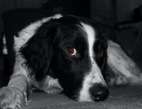 Weet u wat er gebeurt met uw hond als u eerder overlijdt?